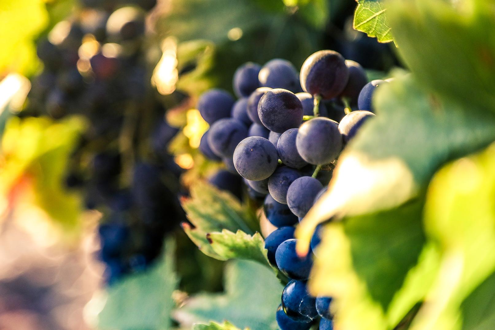 Château la Valetanne domaine viticole La Londe les Maures